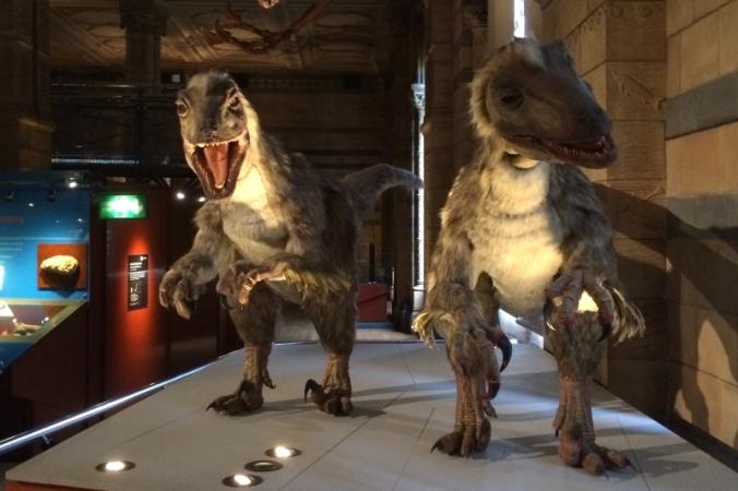natural history museum deinonychus