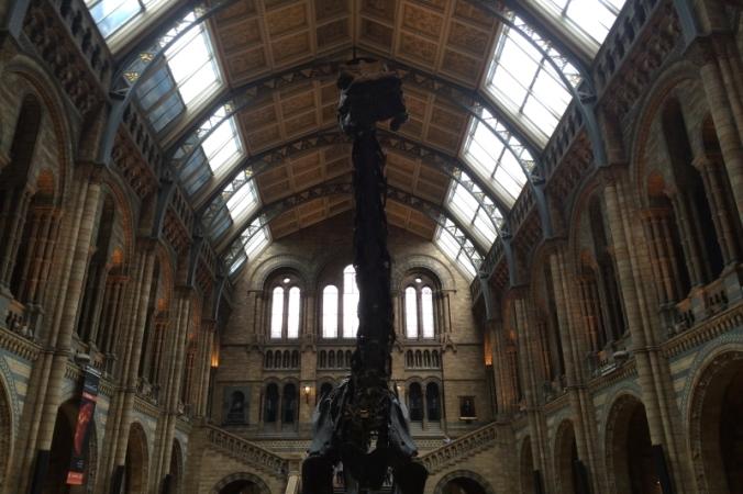 natural history museum diplodocus