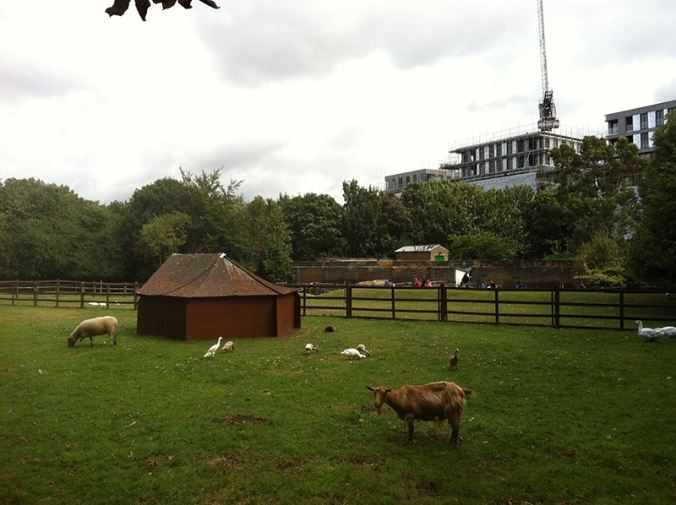 hackney-city-farm-5