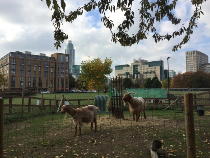 vauxhall-city-farm-goats